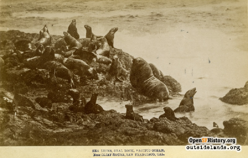 Outside Lands Podcast Episode 232: Sea Lions of Lake Merced