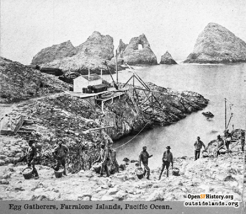 Outside Lands Podcast Episode 380: The Farallon Islands