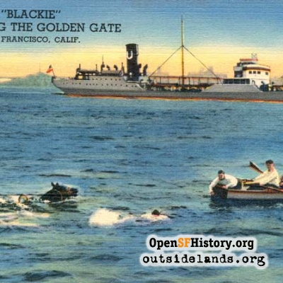Blackie Swimming the Golden Gate postcard